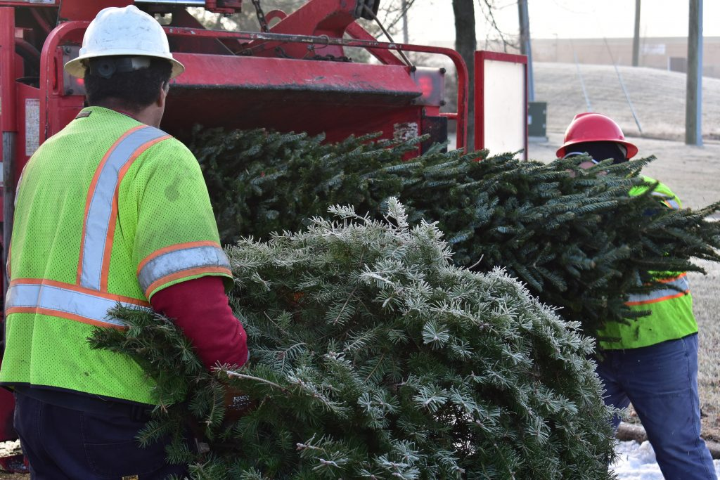 NOVEC Recycling Christmas Trees