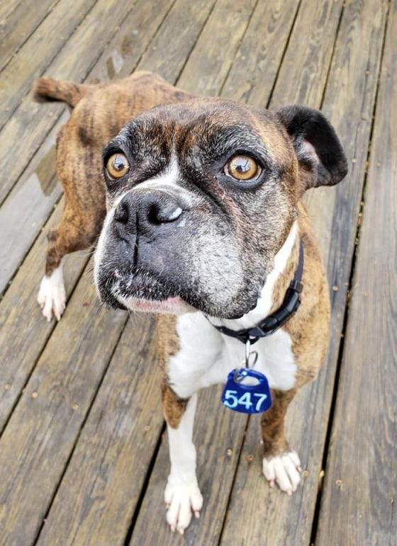 Observing National Pet Month In Prince William County